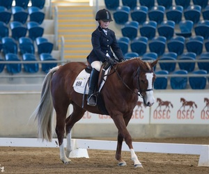 dressage, horse, and canter image