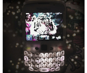 berry, black berry, and cell image