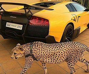 luxury, car, and Lamborghini image