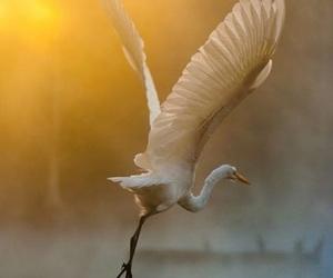 beautiful, bird, and nice image