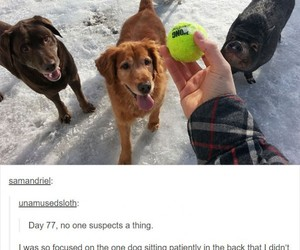funny, tumblr, and dog image