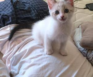 kitten, fuffly, and cute image