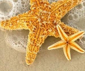 beautiful, sea stars, and nice image