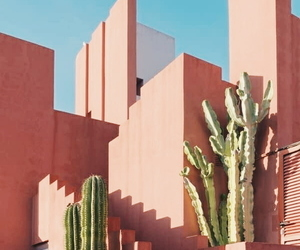 cactus, pink, and architecture image