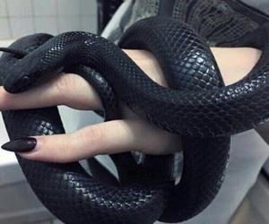 snake, black, and nails image