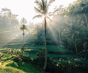 green, bali, and nature image