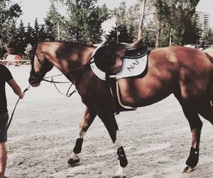 caballo, classy, and fun image