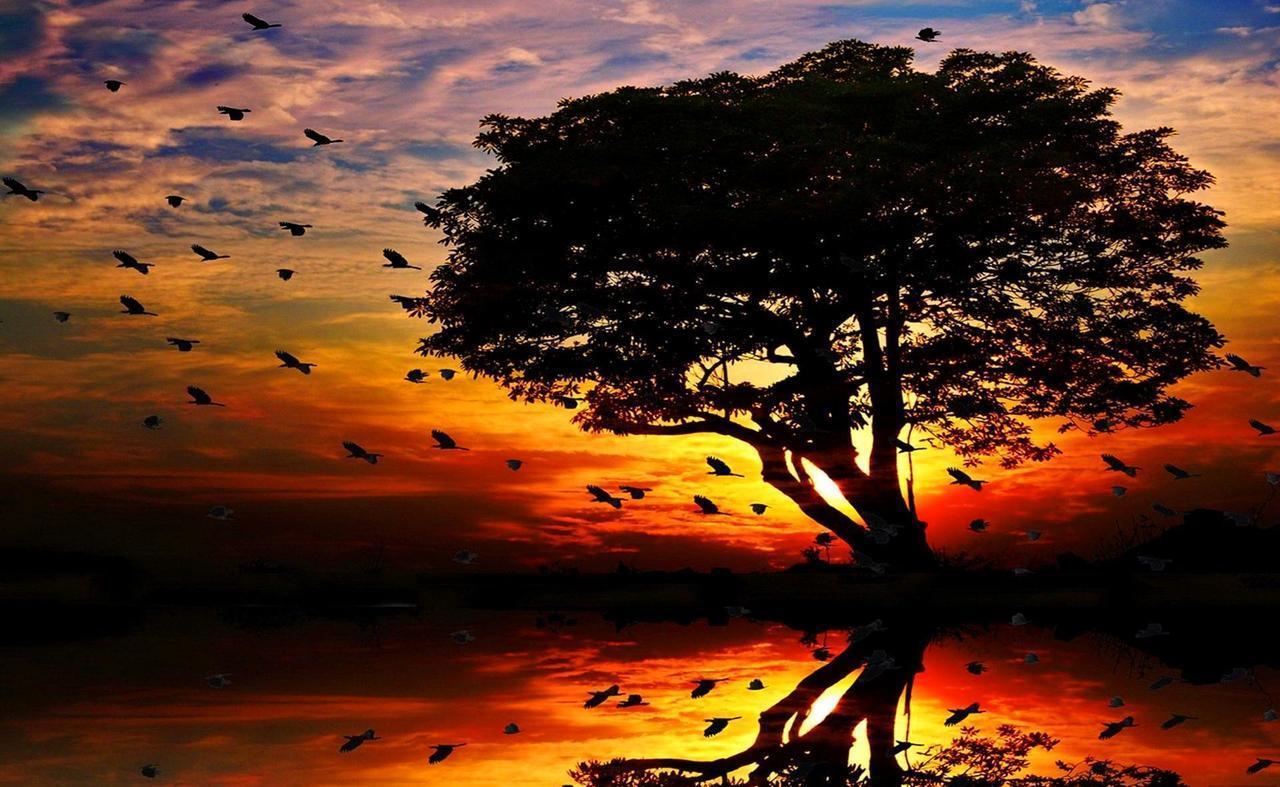 bird and sunset image