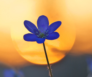 beautiful, blue, and contrast image
