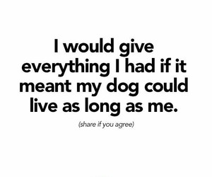 dogs and quotes image