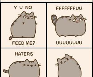 Cat Memes And Pusheen The Image