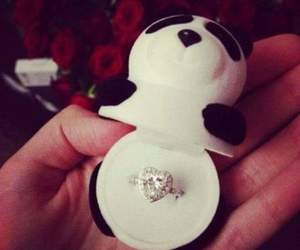 panda and ring image
