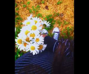 chamomile, flowers, and yellow image