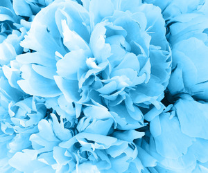 blue, classic, and flowers image