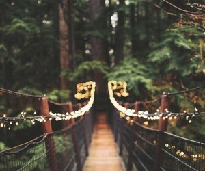 nature, lights, and forest image