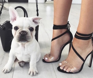 fashion, dog, and shoes image