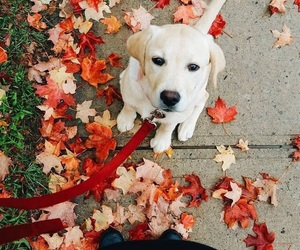 dog, autumn, and leaves image