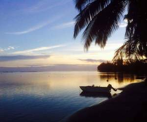 boat, coconuttree, and lové image