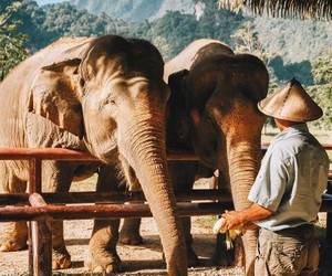 adventure, animals, and elephants image