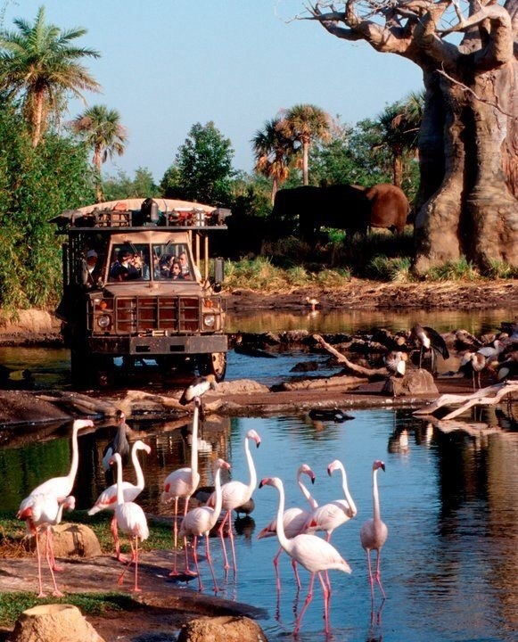 disney, disney world, and kilimanjaro safari image