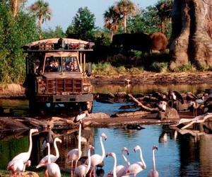 disney, disney world, and kilimanjaro safari image