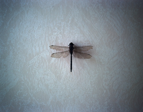 dragonfly, libellule, and mayfly image