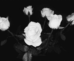 24 Images About Black And White Rose Aesthetic On We Heart