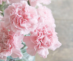 flowers, pink, and carnation image