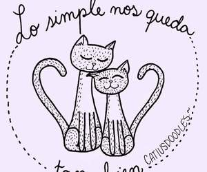 cat, frases, and phrases image