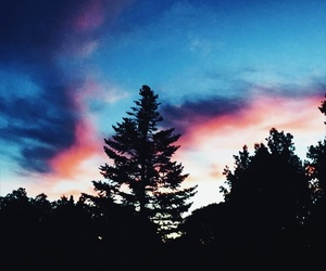 blue, pink, and tree image