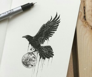 bird, black, and black&white image