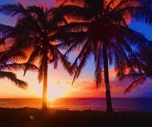 background, palm trees, and sunset image