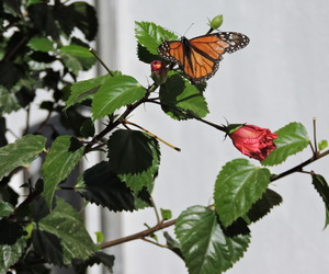 animal, butterflies, and butterfly image