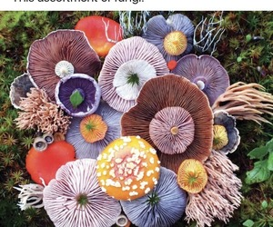 colorful, mushrooms, and nature image