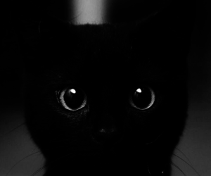 black and white, cat, and cat black image