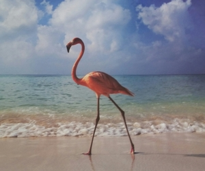 flamingo, beach, and pink image