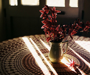 flowers, sun, and photography image