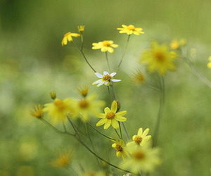 50mm, flowers, and 1.8 image