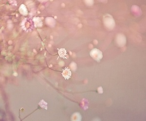 flowers and rose gold image