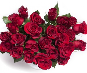 red, red roses, and rose image