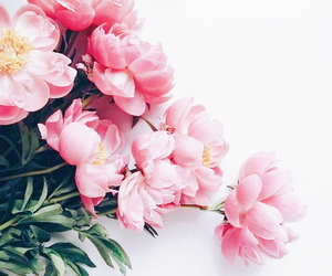 blooms, floral, and florals image