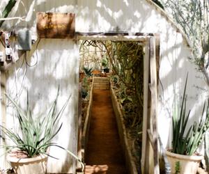 adventure, cacti, and cactus image