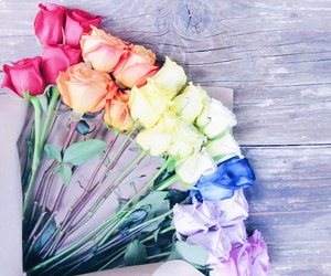 blooms, colorful, and colors image
