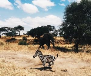 animals, discover, and sebra image