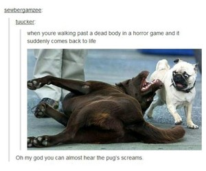 funny, dog, and game image