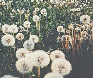 flowers, nature, and 💐 image