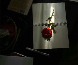 rose, red, and alternative image