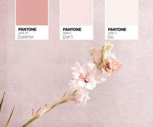 flowers, kitchen, and pale pink image