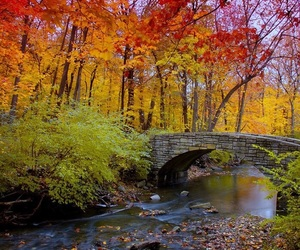 autumn, bridge, and nature image