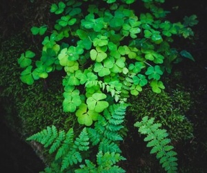 aesthetic, clover, and forest image